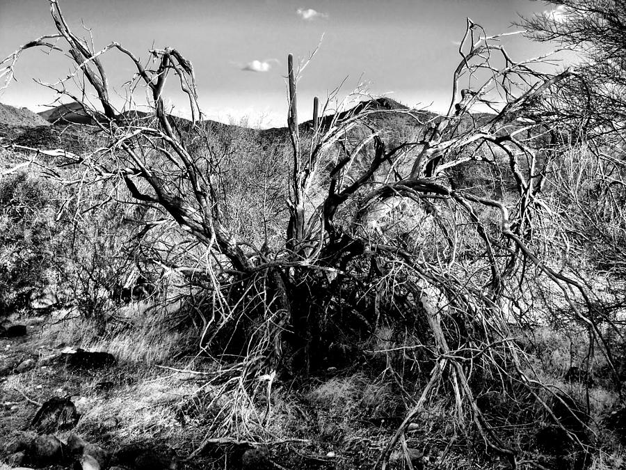 Desert Days Photograph  - Desert Days Fine Art Print