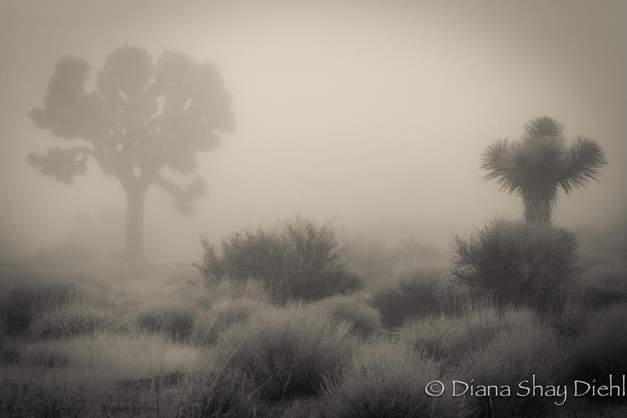 Desert Fog Photograph