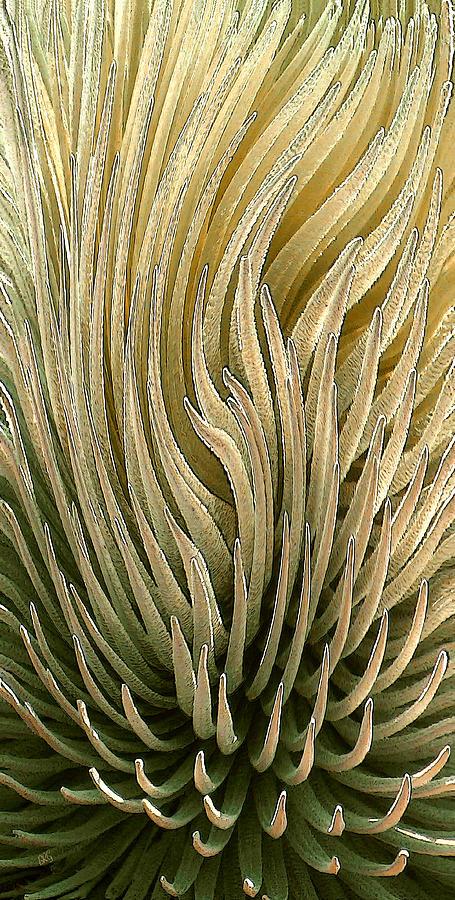 Succulent Photograph - Desert Green by Ben and Raisa Gertsberg