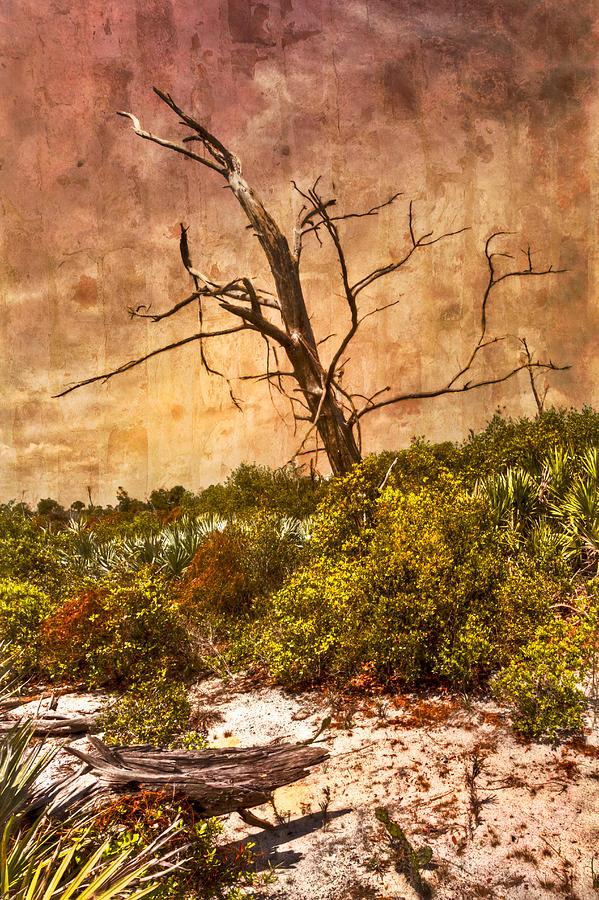 Desert Rose Photograph