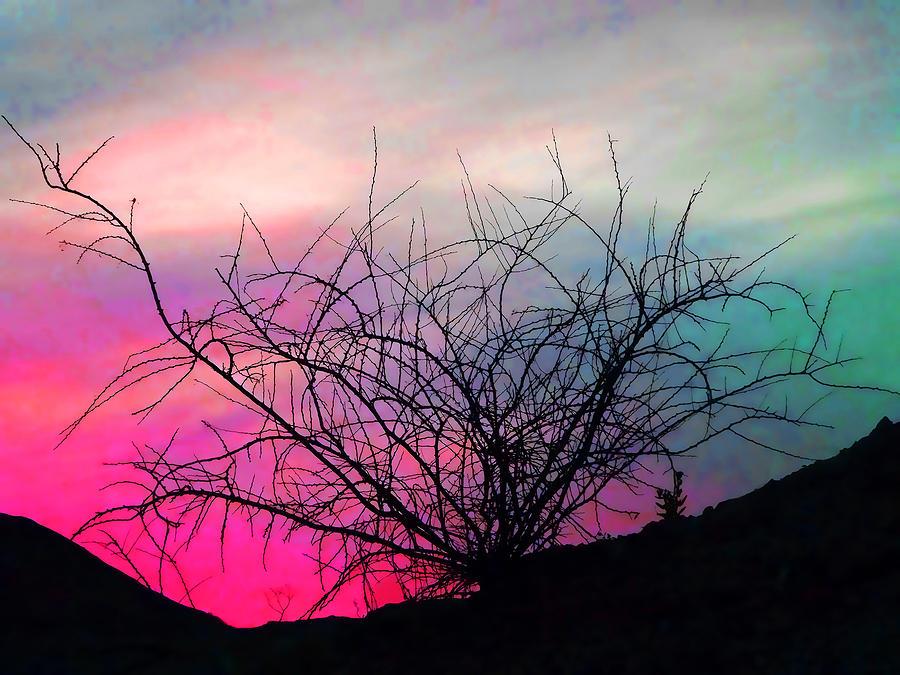 Landscape Photograph - Desert Sunset by Terril Heilman