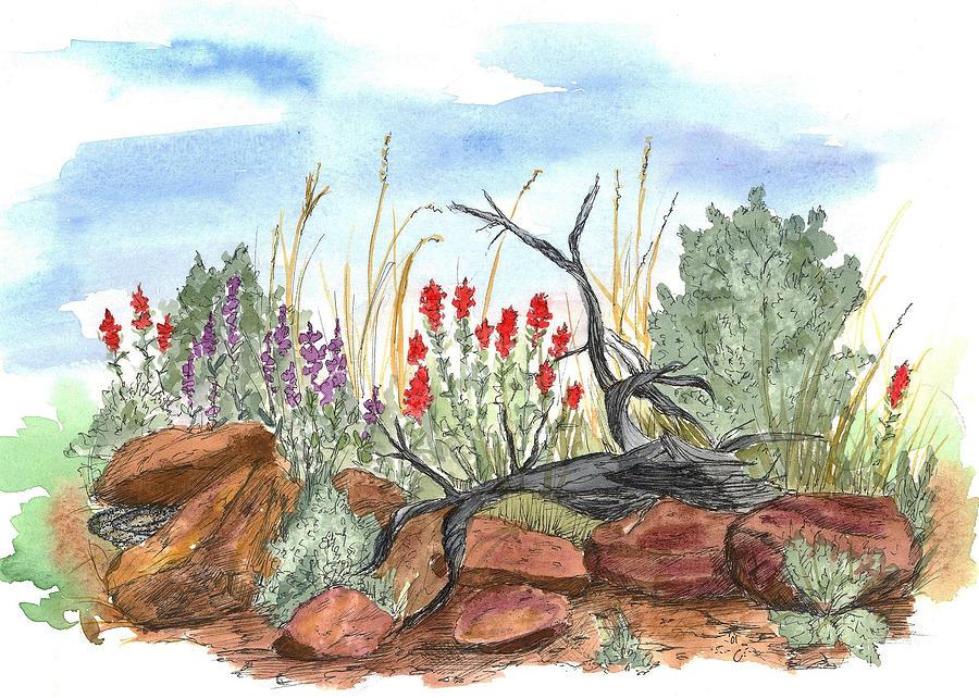 Desert Wildflowers Drawing