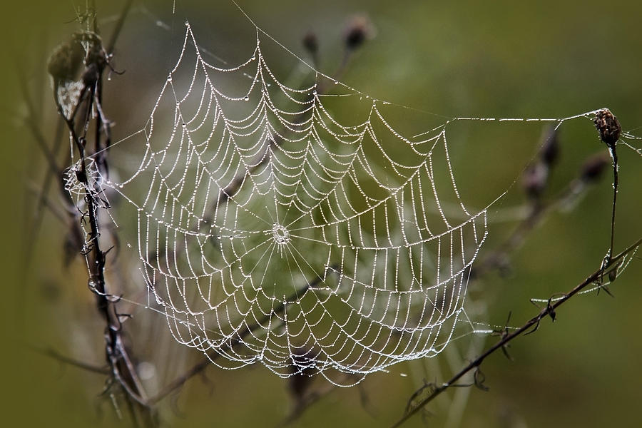 Dew Photograph - Dew Drops Spider Web by Christina Rollo