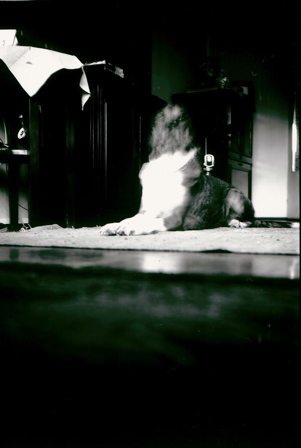 Photograph - Diablog by Antonio Castillo