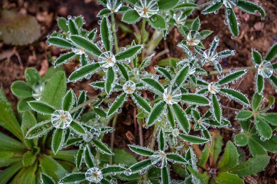 Diamonds Photograph - Diamond Flowers by Kelly Kitchens