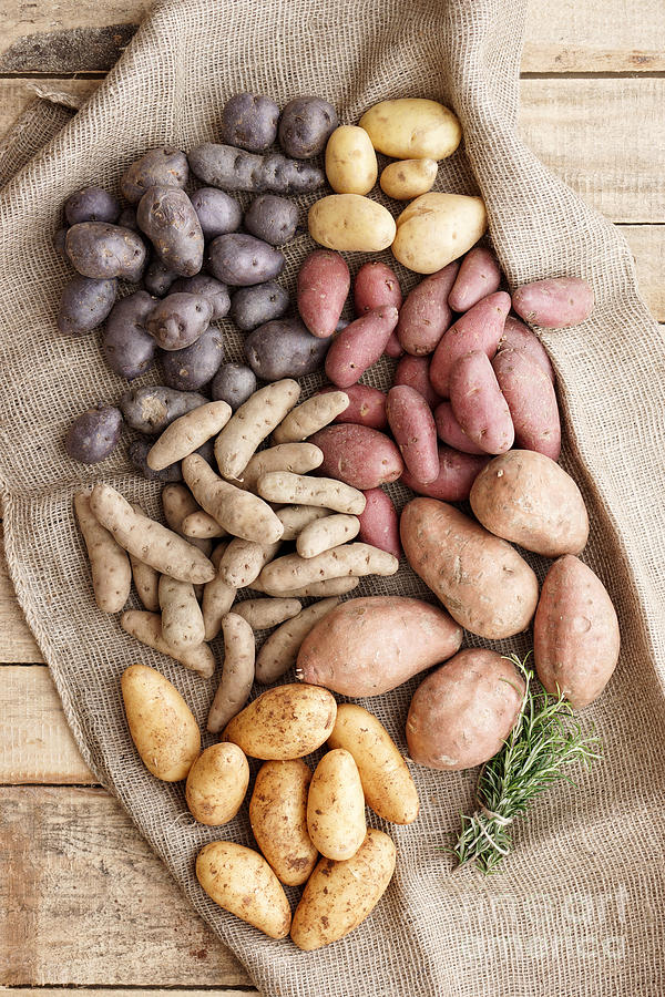 Different Sorts Of Potatoes Photograph  - Different Sorts Of Potatoes Fine Art Print