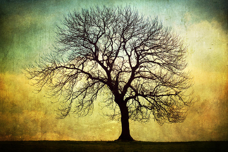 Digital Art Tree Silhouette Photograph  - Digital Art Tree Silhouette Fine Art Print