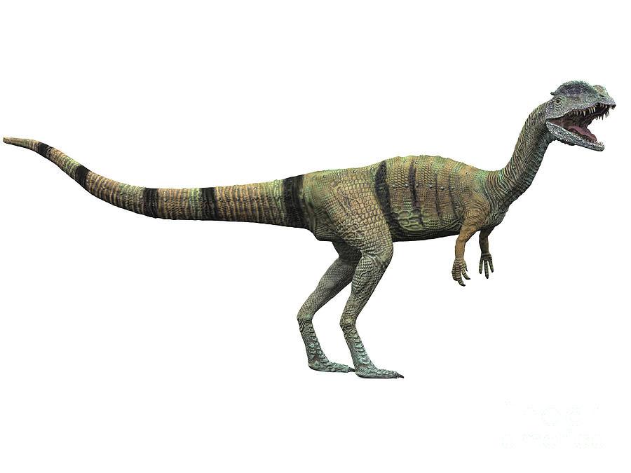 Dilophosaurus Standing, White Digital Art