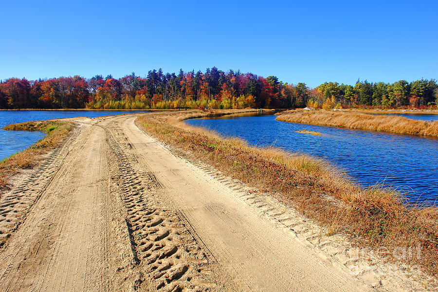 Dirt Road In Marsh Photograph