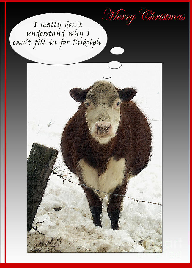 Disappointed Christmas Cow Photo Greeting Card Photograph