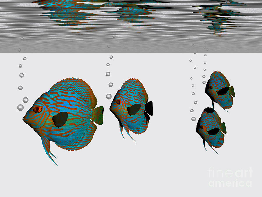 Discus Fish Painting  - Discus Fish Fine Art Print