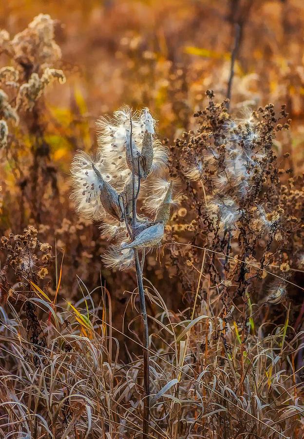 Ditch Beauty Photograph