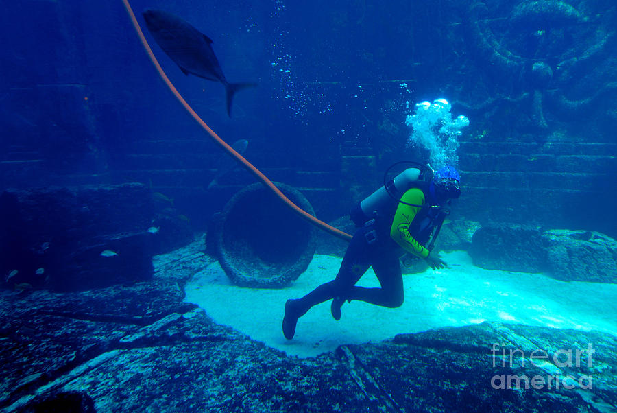 Diver At The Dig Aquarium Atlantis Resort Photograph  - Diver At The Dig Aquarium Atlantis Resort Fine Art Print