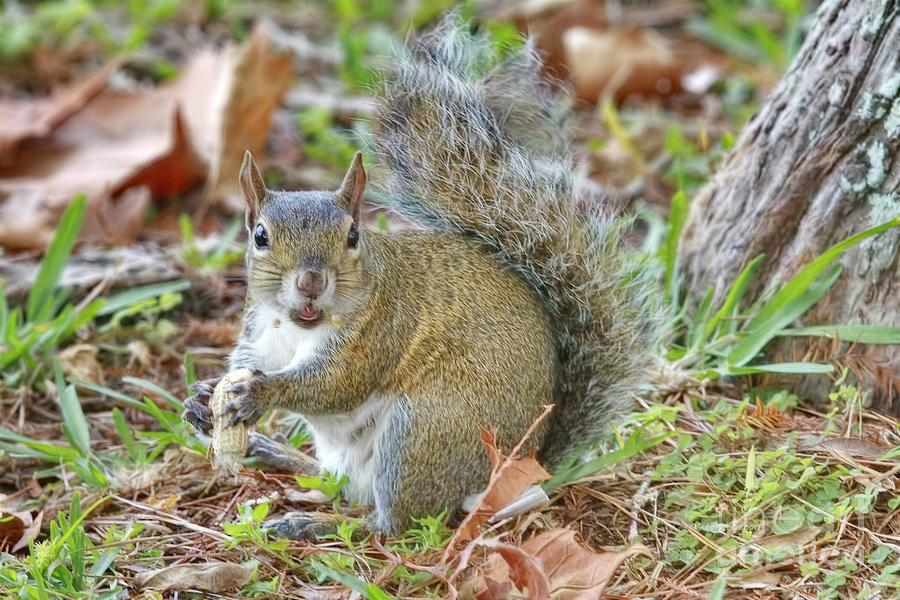 Squirrel Photograph - Do I Have Any On My Face by Deborah Benoit