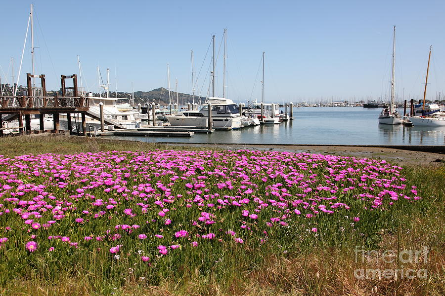 Docks At Sausalito California 5d22695 Photograph