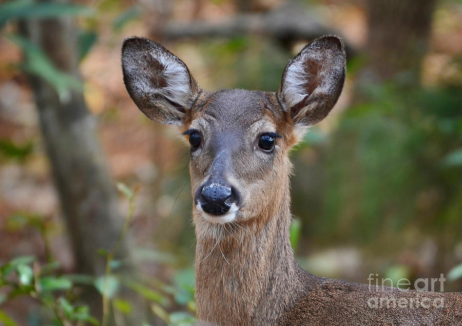 Doe Portrait Photograph