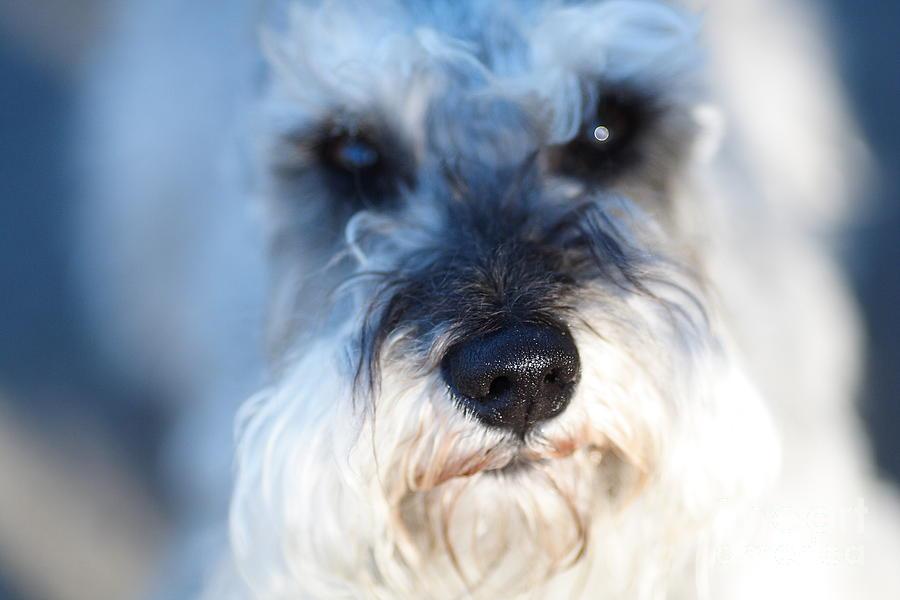 Dog 2 Photograph