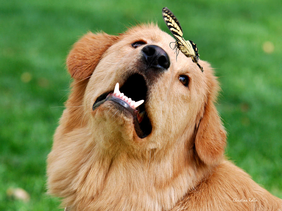 Dog And Butterfly Photograph