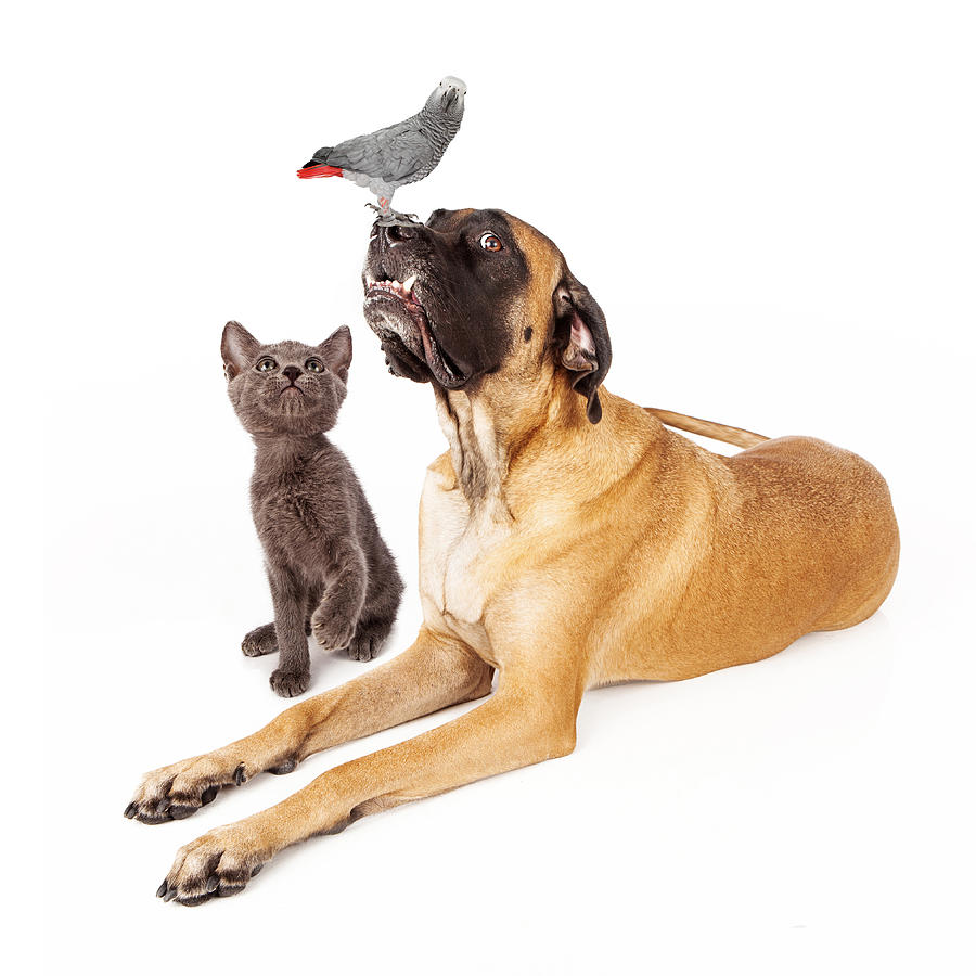 Dog And Cat Looking At A Bird Photograph