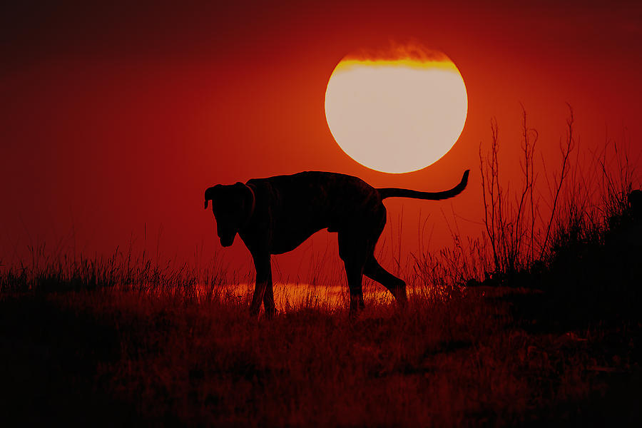 Dog At Sunset Photograph