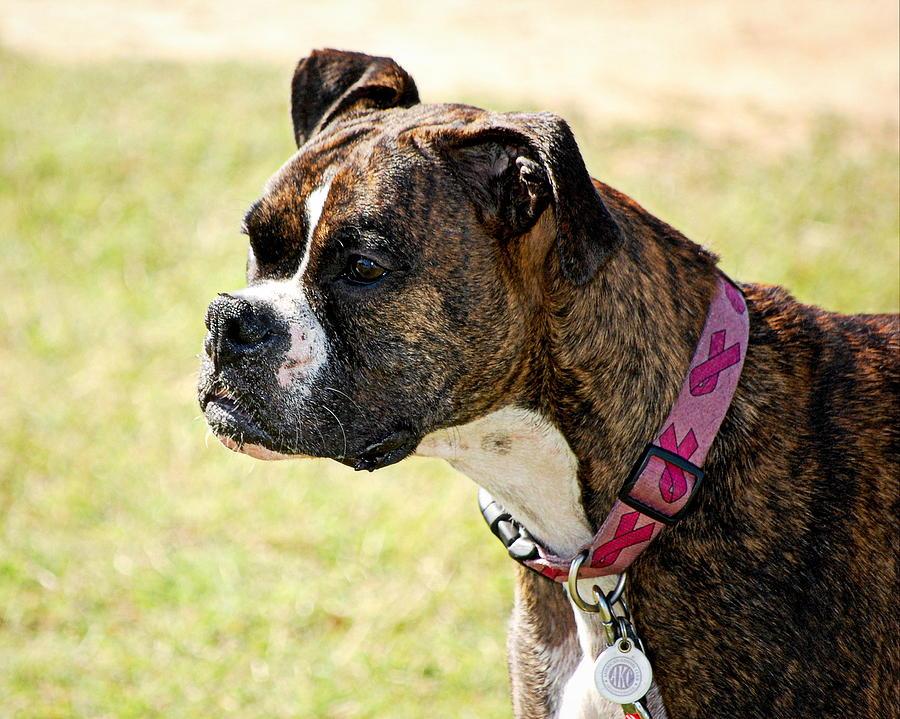 Animal Photograph - Dog Gone Pink by AJ  Schibig