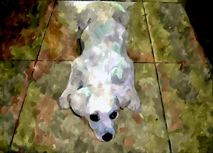 Dog Lying On Floor  Painting  - Dog Lying On Floor  Fine Art Print