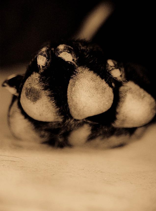 Dog Paw Pyrography