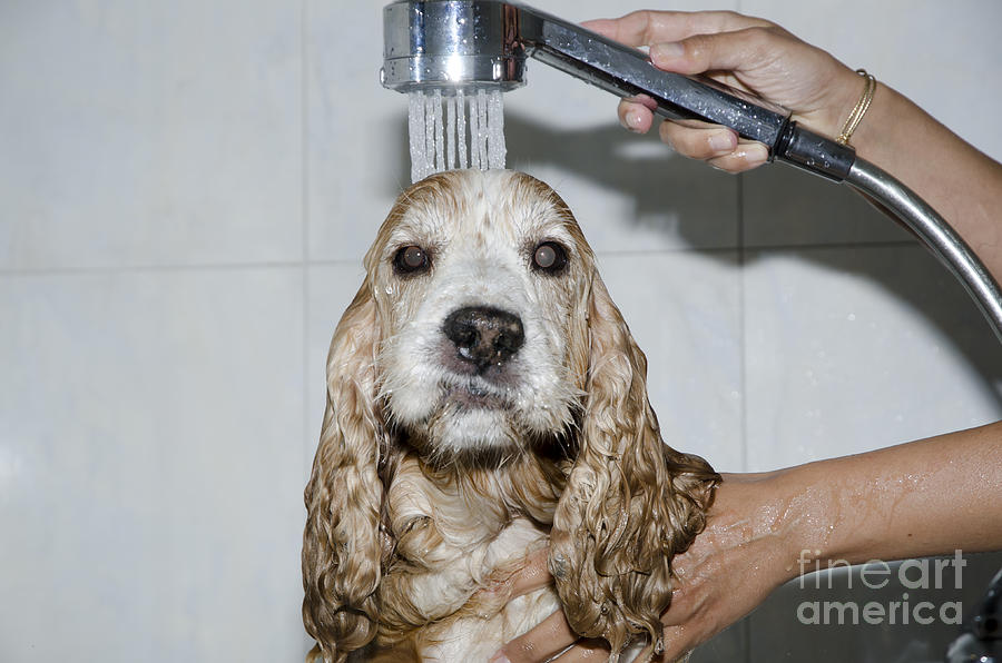 Dog Taking A Shower Photograph