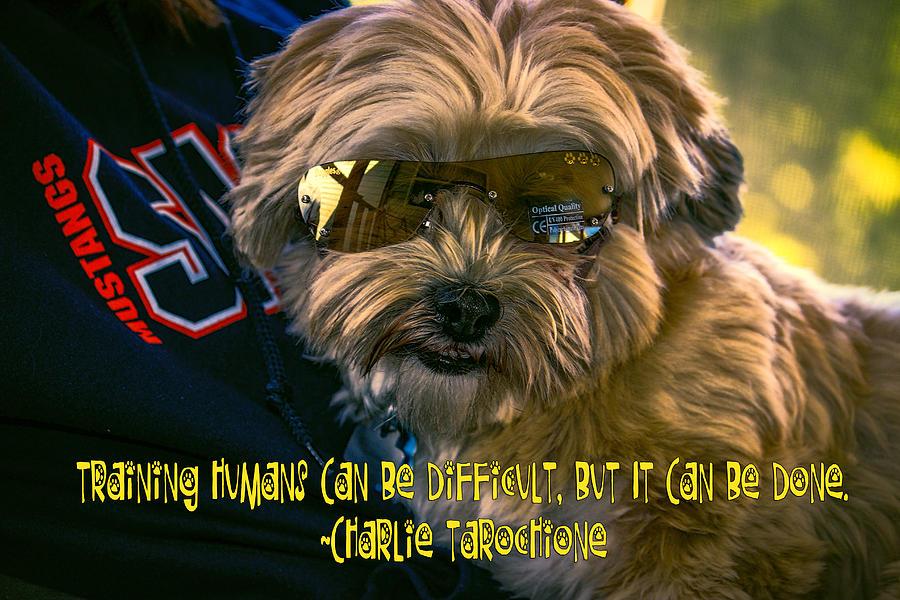 Dog Training Humans Digital Art by Kathy Tarochione