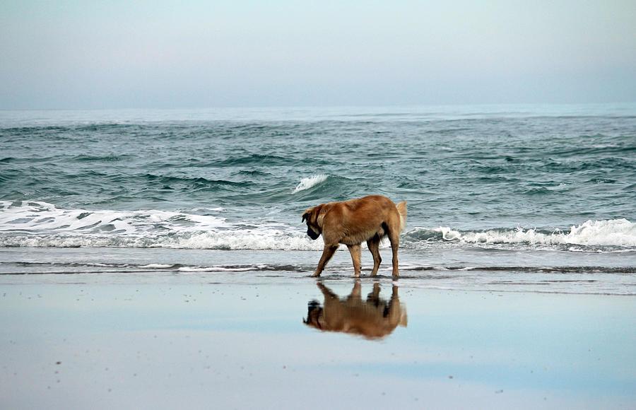 Dog Walking Photograph