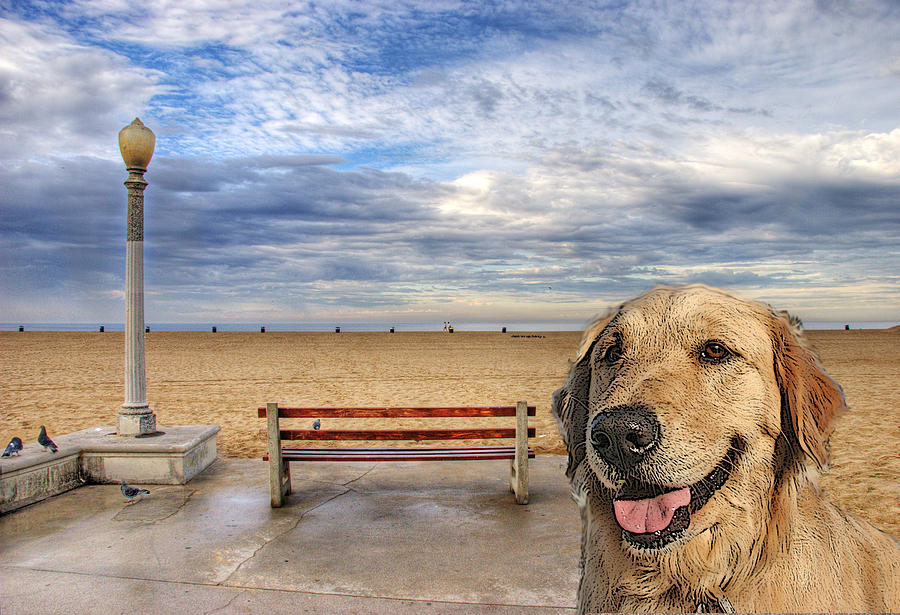 Doggie Days Of Summer Photograph