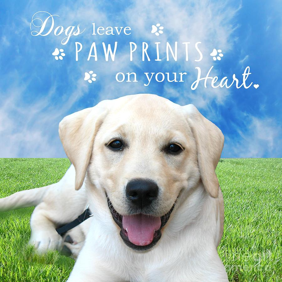 Dogs Leave Paw Prints On Your Heart Photograph  - Dogs Leave Paw Prints On Your Heart Fine Art Print