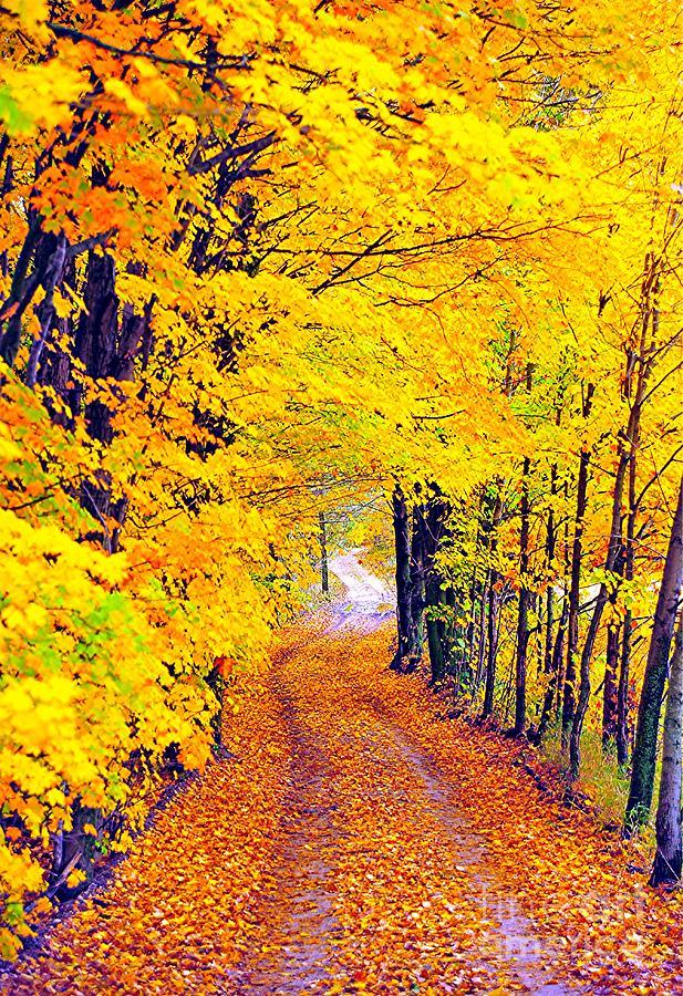 Doing The Autumn Twist Photograph
