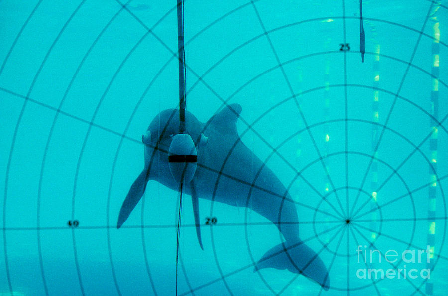 Nature Photograph - Dolphin Experiment by James L. Amos