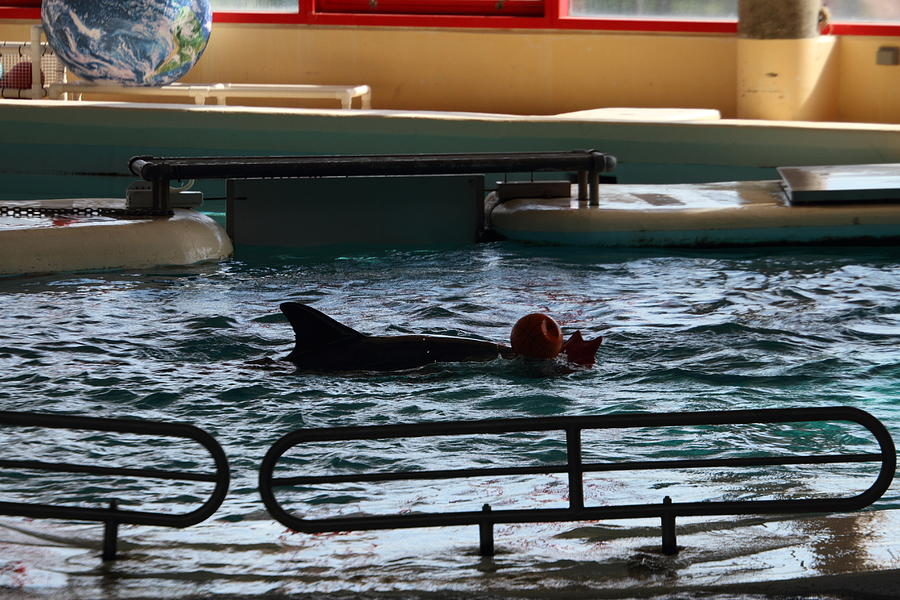 Dolphin Show - National Aquarium In Baltimore Md - 1212111 Photograph