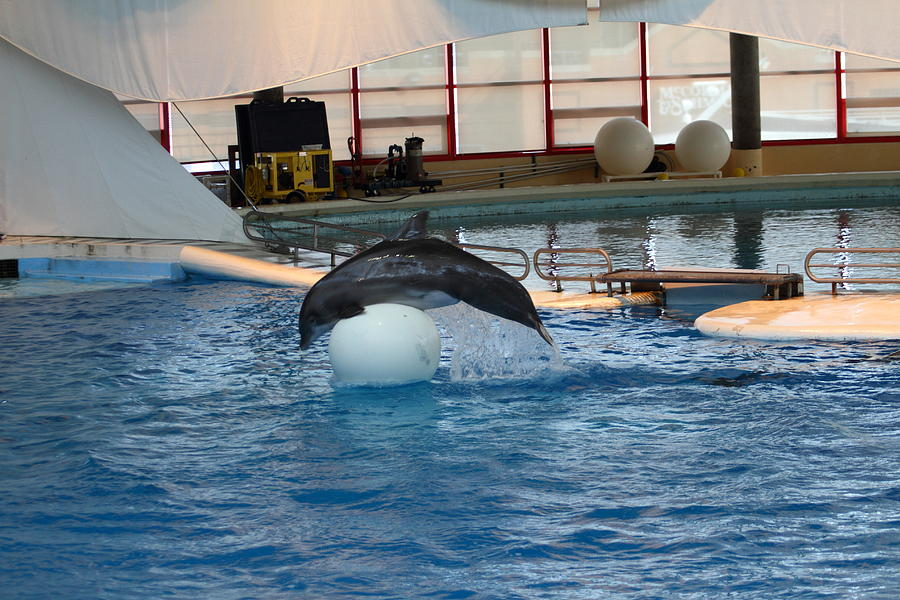 Dolphin Show - National Aquarium In Baltimore Md - 1212171 Photograph