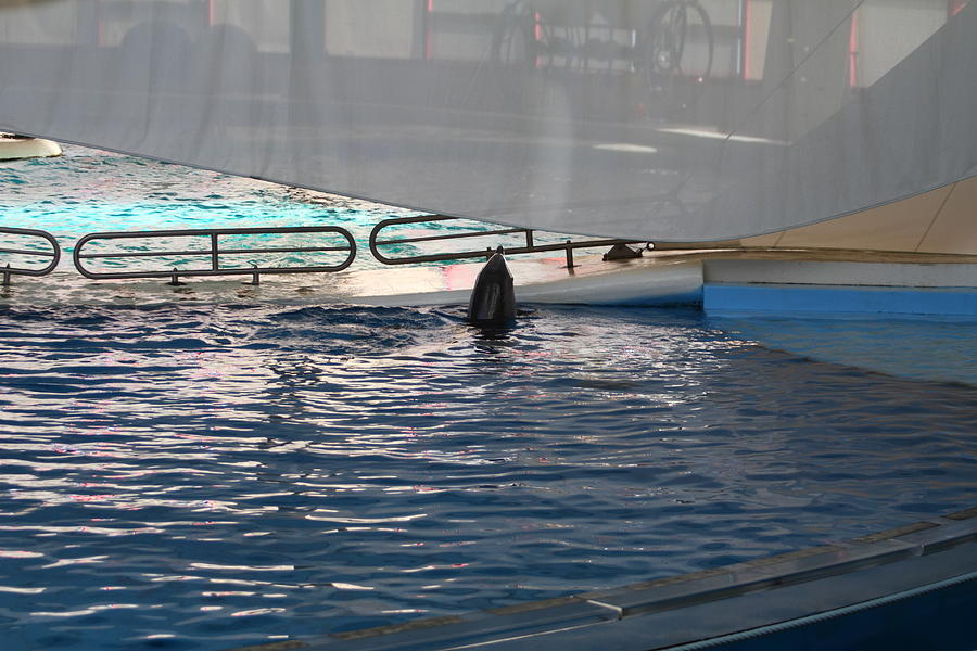 Dolphin Show - National Aquarium In Baltimore Md - 121219 Photograph