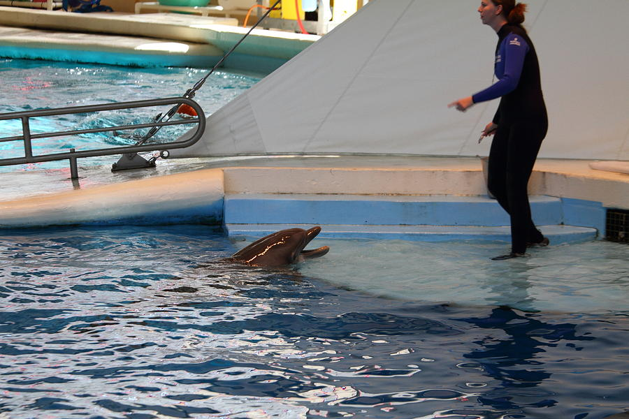Dolphin Show - National Aquarium In Baltimore Md - 1212195 Photograph