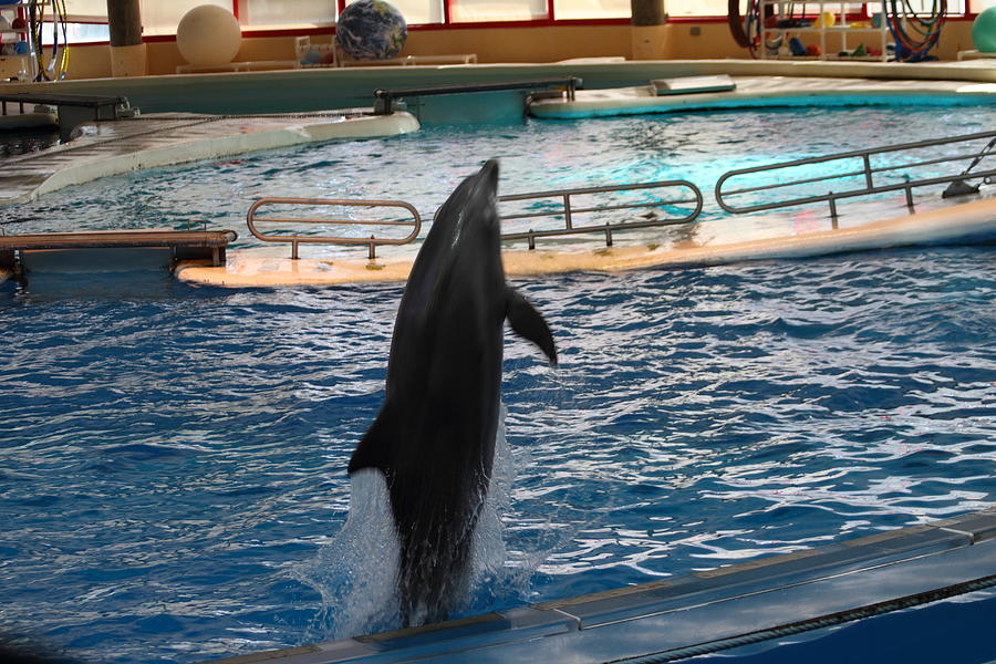 Dolphin Show - National Aquarium In Baltimore Md - 1212209 Photograph