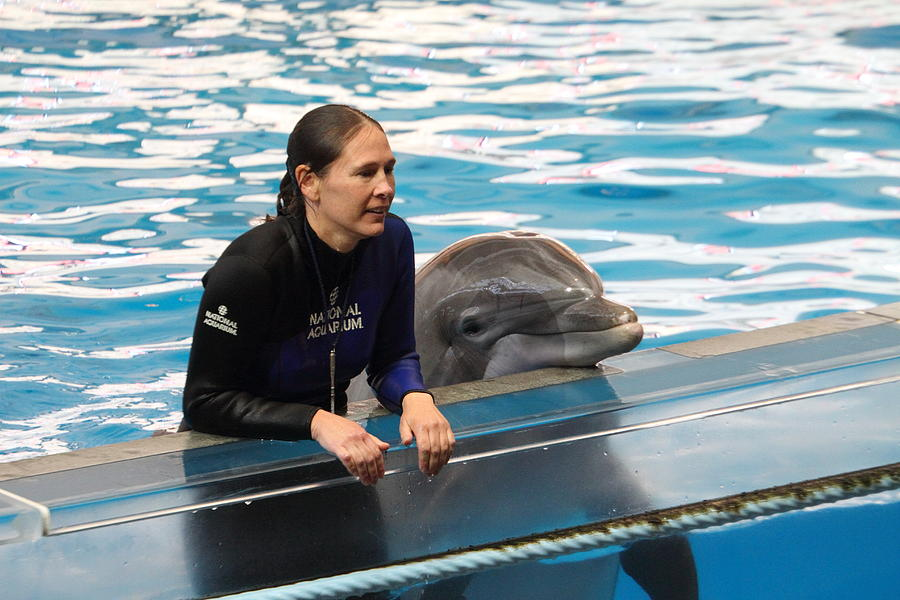Dolphin Show - National Aquarium In Baltimore Md - 1212230 Photograph