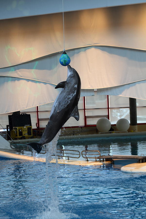 Dolphin Show - National Aquarium In Baltimore Md - 1212234 Photograph