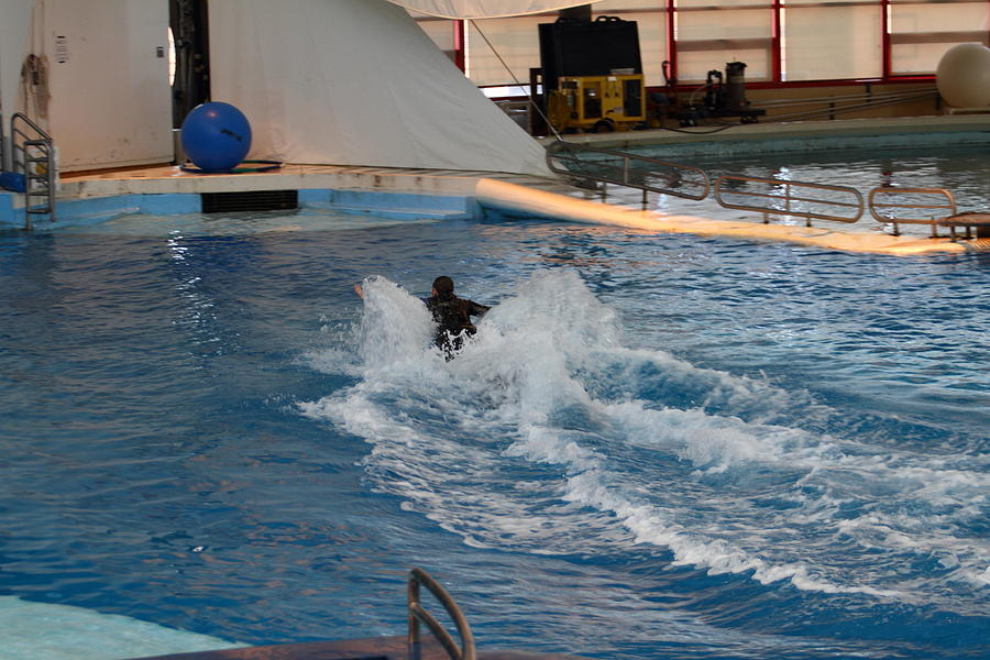Inner Photograph - Dolphin Show - National Aquarium In Baltimore Md - 1212245 by DC Photographer
