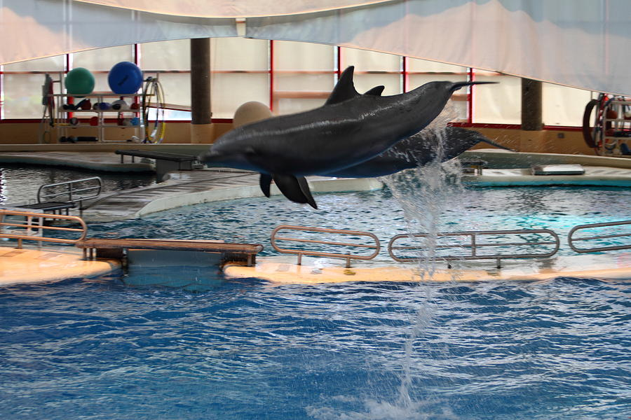 Inner Photograph - Dolphin Show - National Aquarium In Baltimore Md - 1212250 by DC Photographer