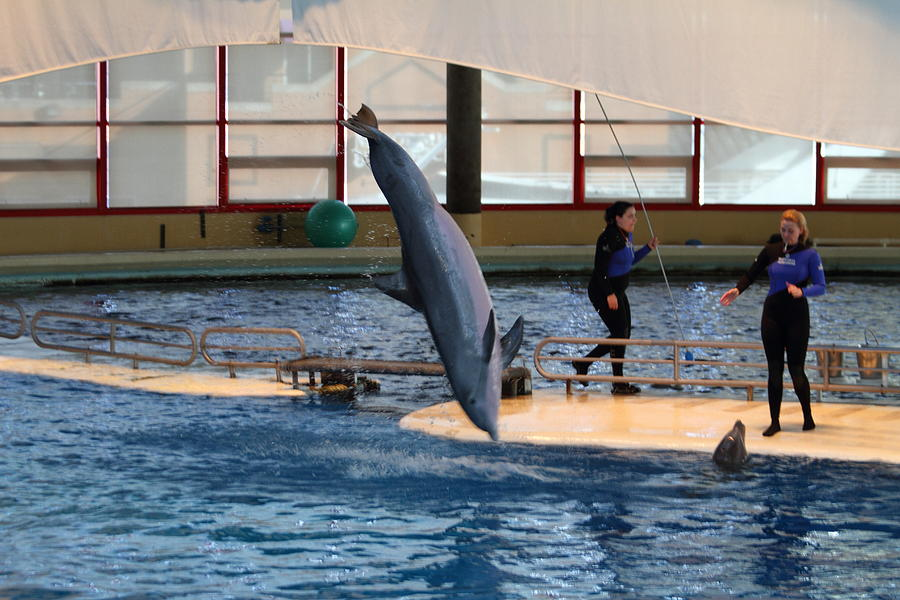 Inner Photograph - Dolphin Show - National Aquarium In Baltimore Md - 121226 by DC Photographer