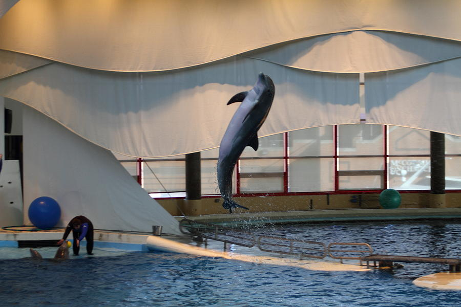 Dolphin Show - National Aquarium In Baltimore Md - 121255 Photograph
