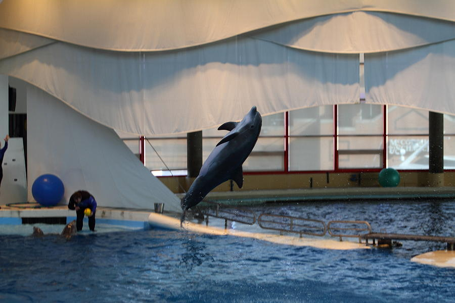 Dolphin Show National Aquarium In Baltimore Md 121256 Photograph By Dc Photographer