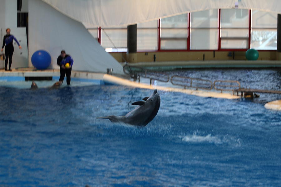Dolphin Show - National Aquarium In Baltimore Md - 121258 Photograph  - Dolphin Show - National Aquarium In Baltimore Md - 121258 Fine Art Print