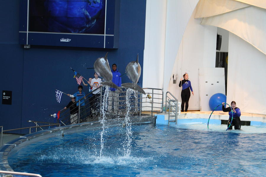 Dolphin Show National Aquarium In Baltimore Md 121288 Photograph By Dc Photographer