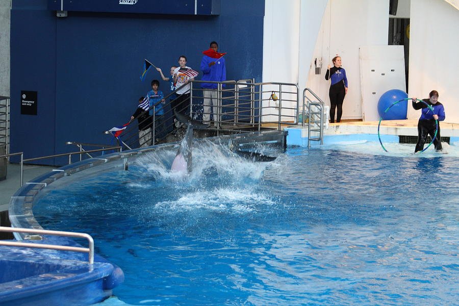 Dolphin Show - National Aquarium In Baltimore Md - 121292 Photograph