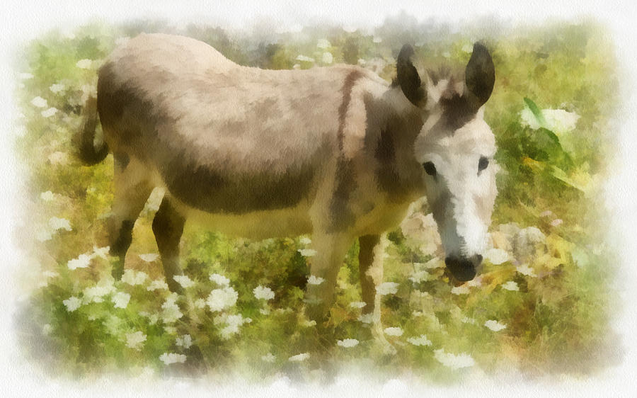 Donkey Greece Painting